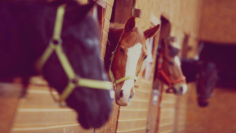 Equine / Horse Insurance Quotes | Aviva Canada